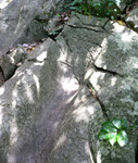 ダイダラボッチの足跡